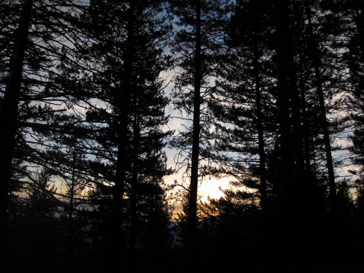 Sunset through the trees in the Lolo National Forest.