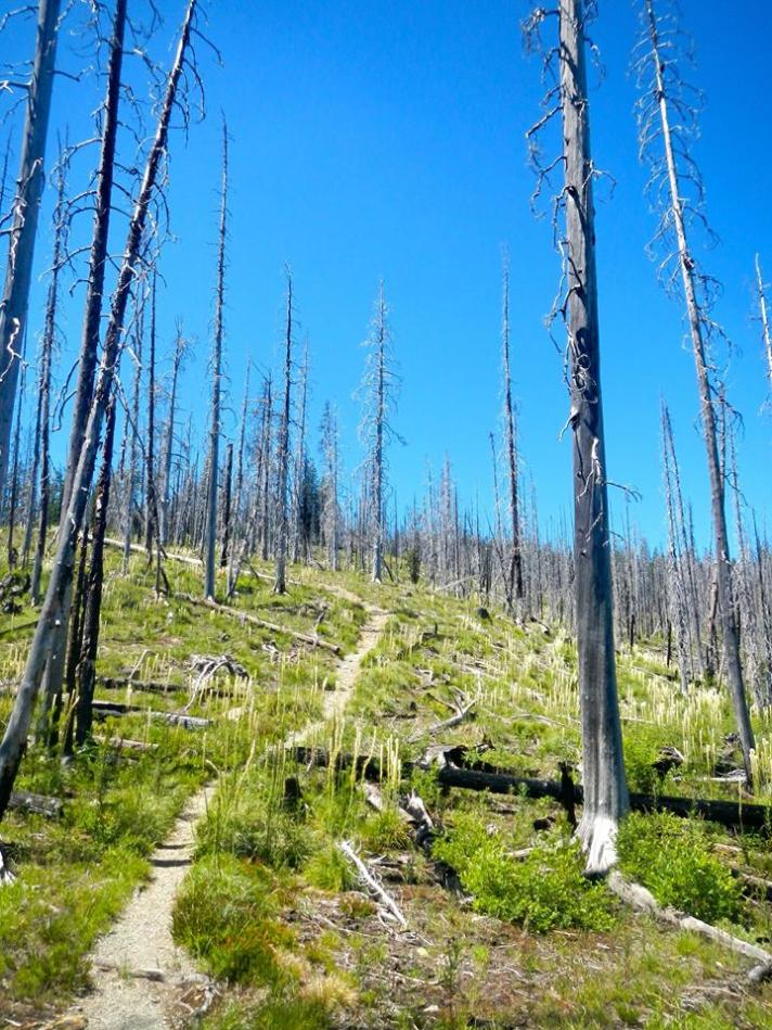 Alicia Heckel TB Boulder Lake Trail