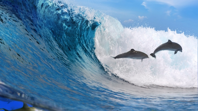dolphins_ocean_wave_freedom_78167_3840x2160
